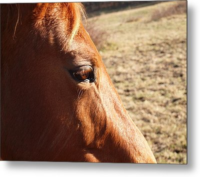 The Eye Of The Horse Metal Print by Robert Margetts