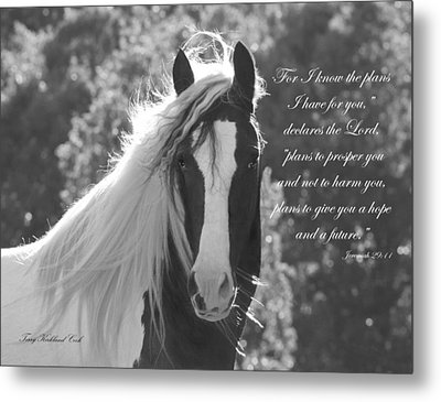 The Eyes Are The Window To The Soul Metal Print by Terry Kirkland Cook
