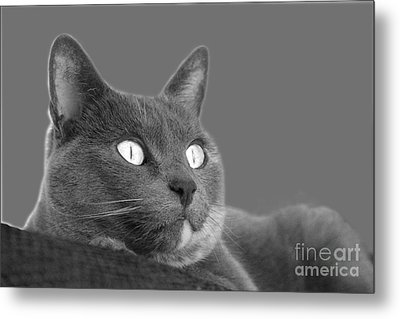Metal Print featuring the photograph The Eyes Have It by Nareeta Martin
