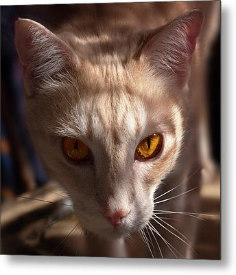 The Eyes Of Raymond Metal Print