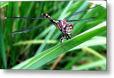 Metal Print featuring the photograph The Face Of A Dragonfly 02 by George Bostian