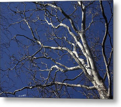 The Family Tree Metal Print by Ed Smith