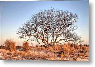 The Family Tree Metal Print by JC Findley