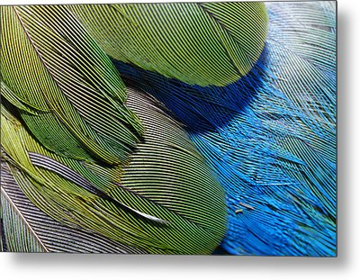 The Feathers Of A Red-winged Parrot Metal Print by Jason Edwards