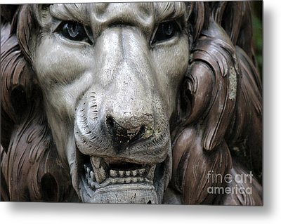 Metal Print featuring the photograph The Fierce Lion  by Kathy  White