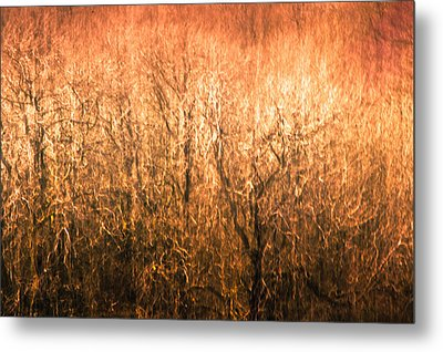 Metal Print featuring the photograph The Forest Fire by Justin Albrecht