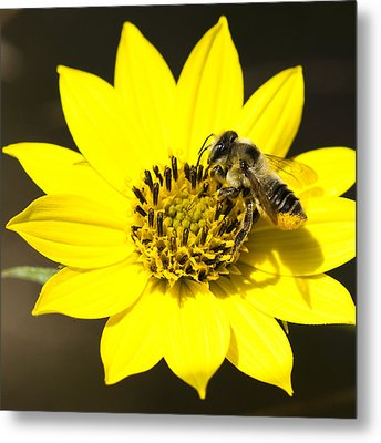Metal Print featuring the photograph The Gatherer by Carrie Cranwill