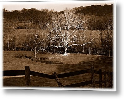 The Giant Of The Valley 2 Metal Print by Mark Fuller