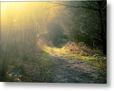 The Glowing Path Metal Print by Justin Albrecht