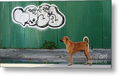 Metal Print featuring the photograph The Graffiti Artist by Nola Lee Kelsey