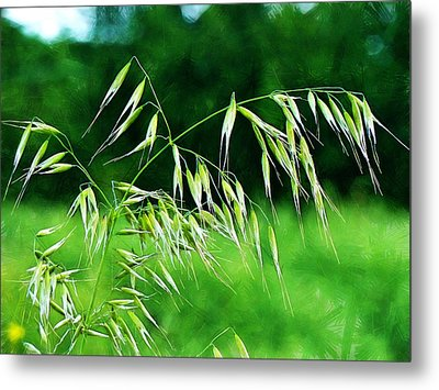 Metal Print featuring the photograph The Grass Seeds by Steve Taylor