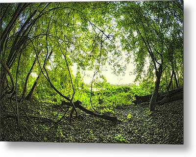 Metal Print featuring the photograph The Green Knoll by Kimberleigh Ladd