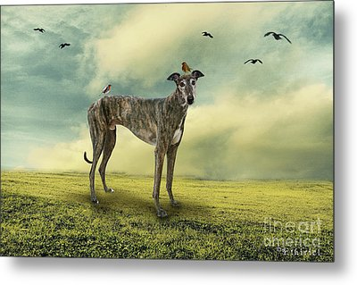 The Greyhound Metal Print by Ethiriel  Photography
