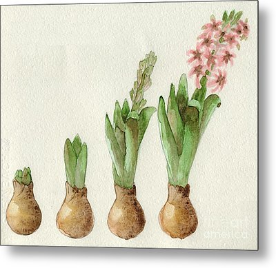 The Growth Of A Hyacinth Metal Print by Annemeet Hasidi- van der Leij