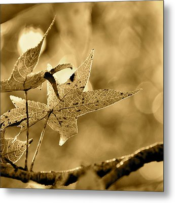 The Gum Leaf Metal Print