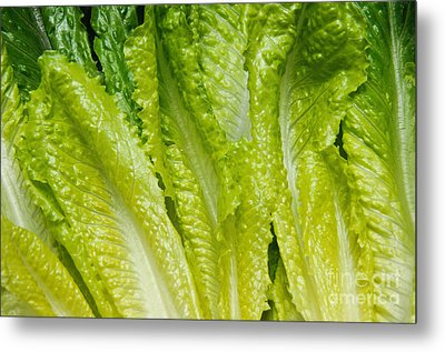 The Heart Of Romaine Metal Print by Andee Design
