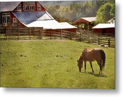 The Horse In The Barn Yard Metal Print by Kathy Jennings