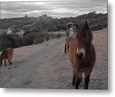 The Horses Of Dover Metal Print