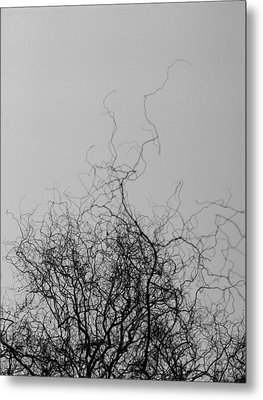 Metal Print featuring the photograph The Idea Tree by Luis Esteves