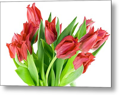 Metal Print featuring the photograph The Isolated First Spring Tulips Background by Aleksandr Volkov