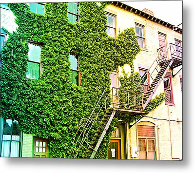 The Ivy And The Irony Metal Print