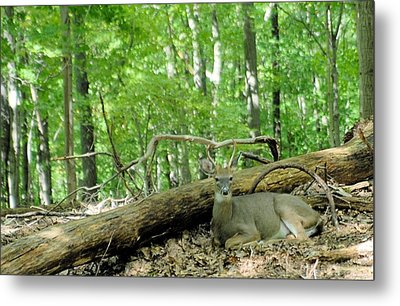 The King Rests Metal Print by