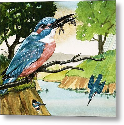 The Kingfisher Metal Print by D A Forrest