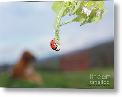 Metal Print featuring the photograph The Lady Bug No.1 by Laurinda Bowling
