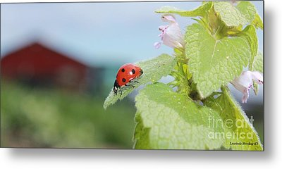 Metal Print featuring the photograph The Lady Bug  No.2 by Laurinda Bowling