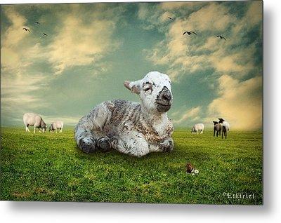The Lamb Metal Print by Ethiriel  Photography