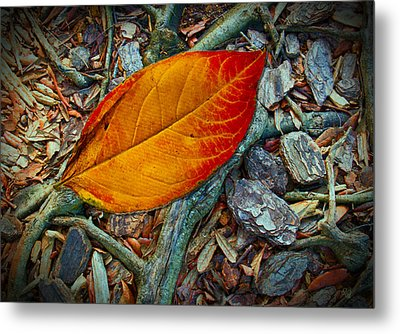 The Last Leaf Metal Print by Barbara Middleton