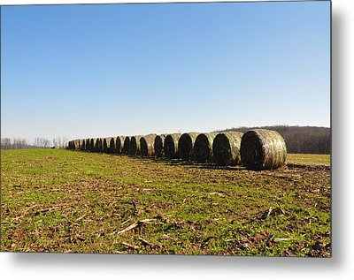 The Line Up Metal Print by Bill Cannon