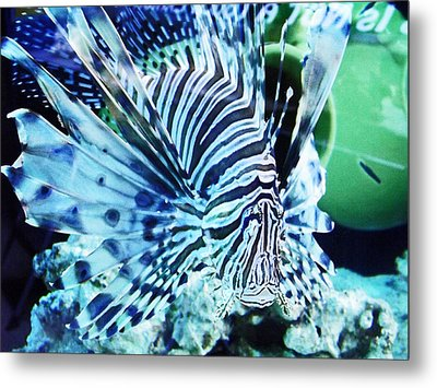 The Lionfish 1 Metal Print by Robin Hewitt