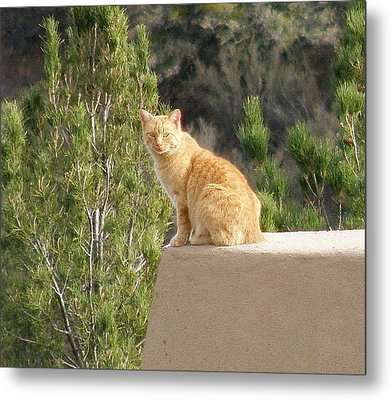 The Lookout Metal Print by FeVa  Fotos