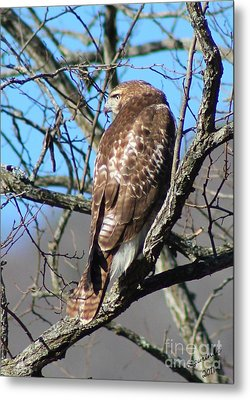 The Lookout Metal Print by Laurinda Bowling