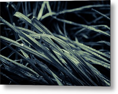 The Lying Grass Metal Print by Andreas Levi