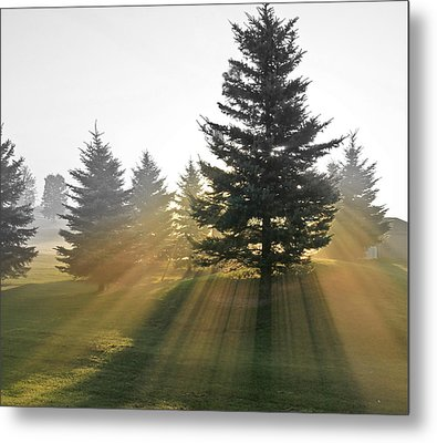 Metal Print featuring the photograph The Magic Of The Morning Light by Nick Mares