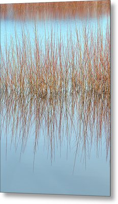 The Marsh Mirror Metal Print by Loree Johnson