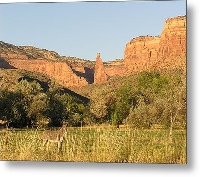 The Mule And Independence Rock Metal Print