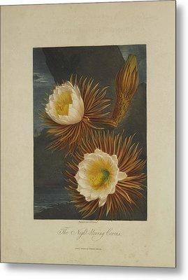 The Night-blooming Cereus Metal Print by Robert John Thornton