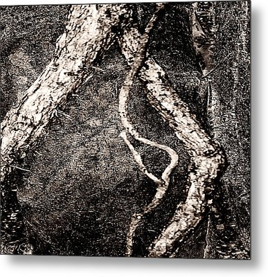 The Old Man Of The Woods Metal Print