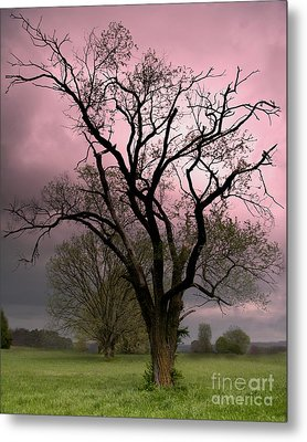The Old Tree Metal Print by Brian Stamm