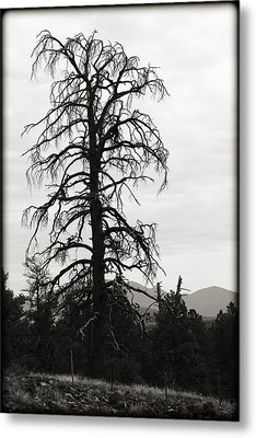 The Old Tree Metal Print by Ricky Barnard