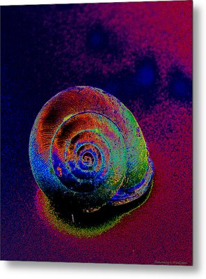The Painted Shell Metal Print