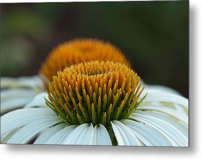Metal Print featuring the photograph The Pair Of Coneflowers by Monte Stevens
