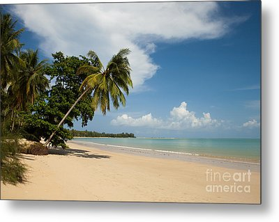 The Palms Of Khao Lak Metal Print by Pete Reynolds