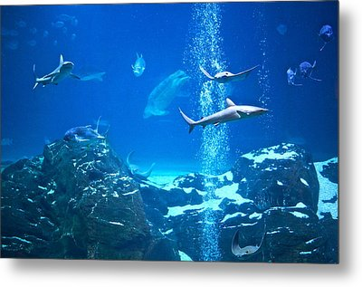 The Peaceable Underwater Kingdom Metal Print