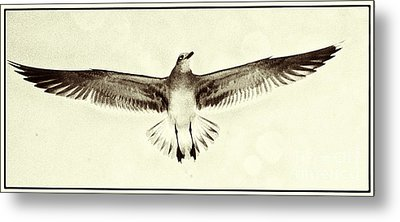 Metal Print featuring the photograph The Perfect Wing by Jim Moore