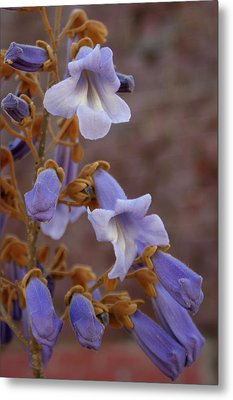 Metal Print featuring the photograph The Princess Flower by Paul Mashburn