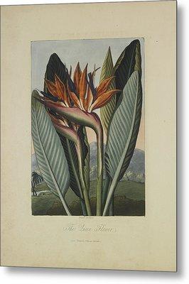 The Queen Flower Metal Print by Robert John Thornton